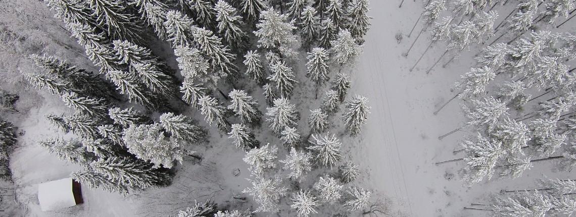 Lumisia kuusia ja mäntyjä